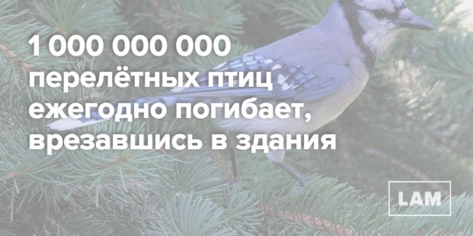 Число дня: сколько перелётных птиц врезаются в здания. Изображение № 1.