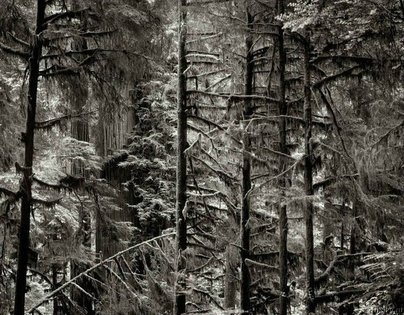 Lonna Tucke Landscapes (без машин). Изображение № 11.