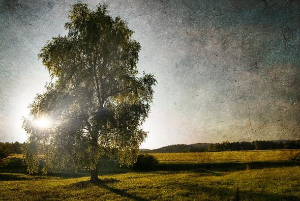 Томас Гаук. Пейзажи на перекрестке времен. Изображение № 14.