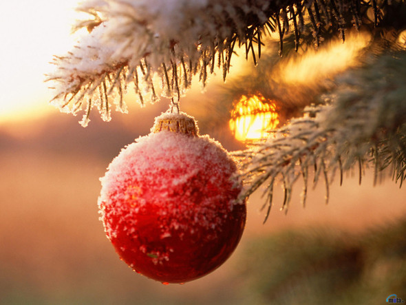 Рождественский дух. Изображение № 17.