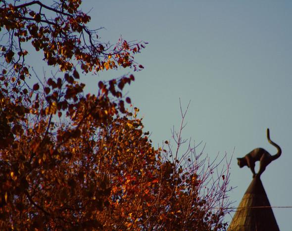 Золотая осень в Риге. Изображение № 6.
