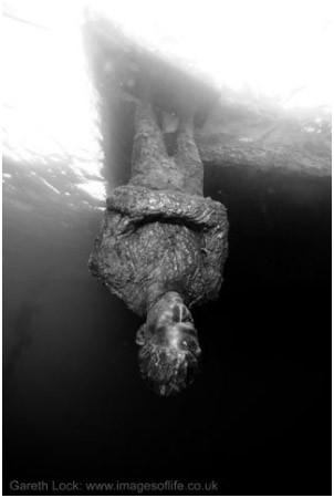 Подводная галерея. Изображение № 16.
