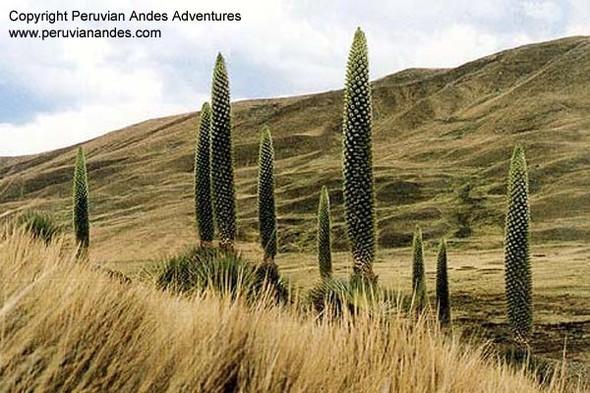 Необычные растения. Изображение № 8.