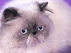 Кошки в интерьере. Изображение № 16.