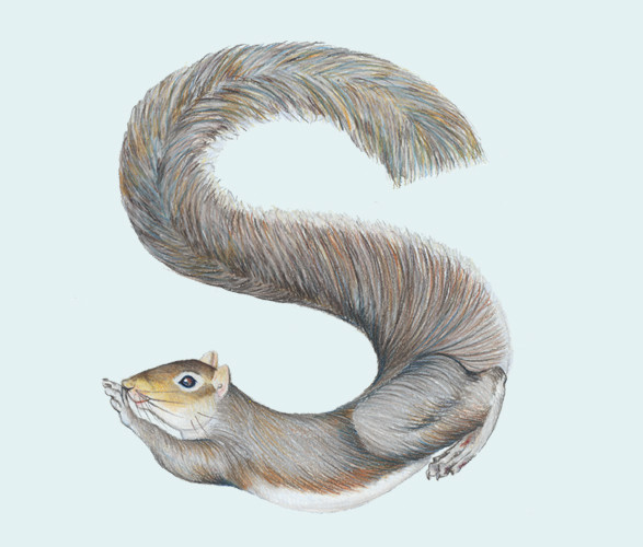 Животный алфавит. Изображение № 12.