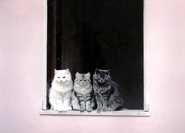 Cat. Window. Изображение № 3.