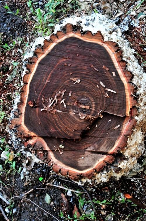 Treefilia. Изображение № 8.