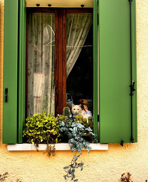 Cat. Window. Изображение № 36.