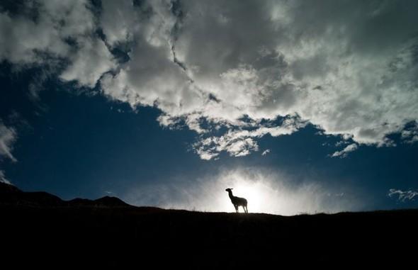 Фотоконкурс National Geographic 2010. Изображение № 25.