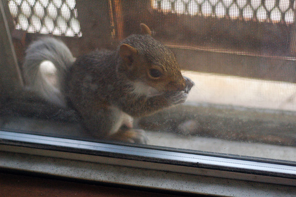 Белка в нашем окне. Изображение № 23.