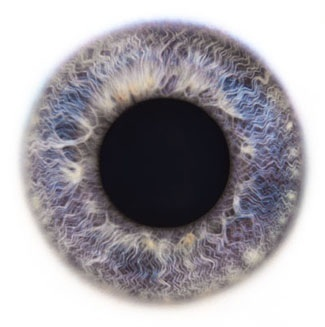 Фотограф Rankin — Eyescapes. Изображение № 15.