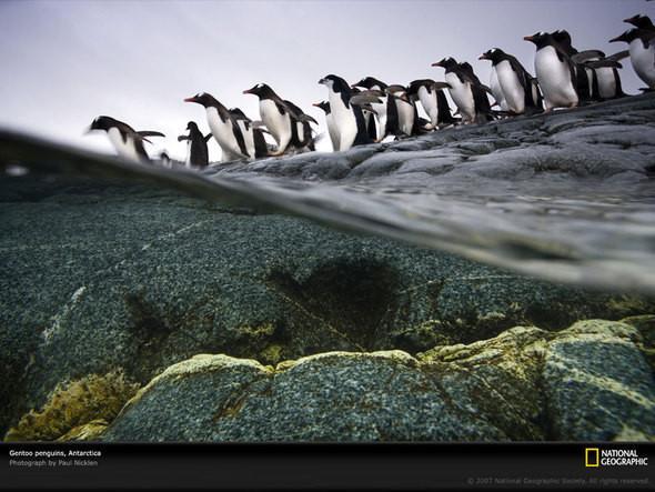 Изображение 11. Документальное фото Пола Никлена.. Изображение № 9.