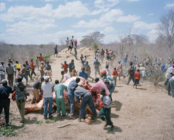 David Chancellor: охота на слона. Изображение № 4.
