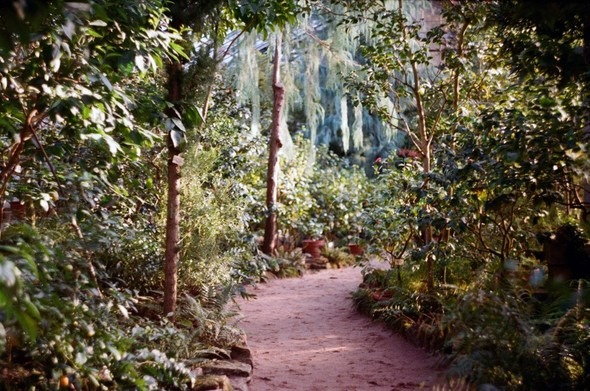 Прогулка по Ботаническому саду. Изображение № 6.