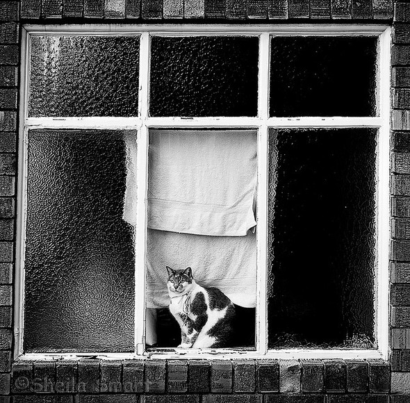 Cat. Window. Изображение № 32.