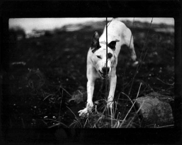Джакомо Брунелли и«другие» животные. Изображение № 3.