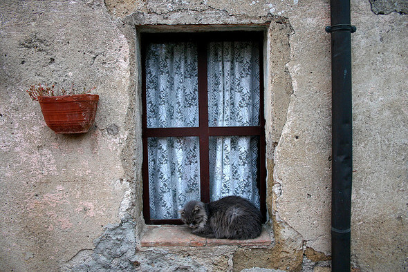 Cat. Window. Изображение № 24.