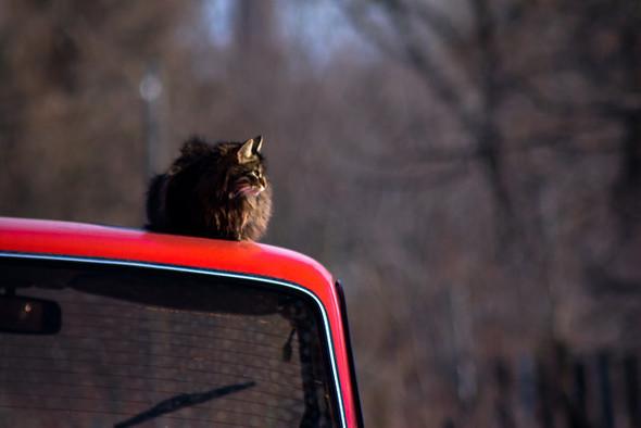Котики и авто. Изображение № 22.