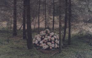 8 фотографов-пейзажистов. Изображение № 58.