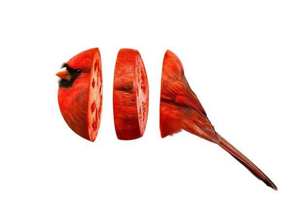 Концепт: животные в виде фруктов. Изображение № 10.