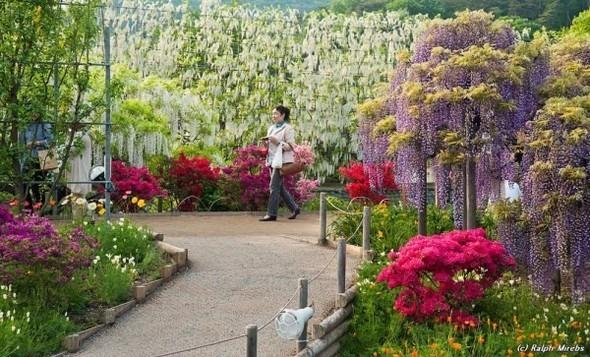 Цветочные водопады Асикага. Изображение № 4.