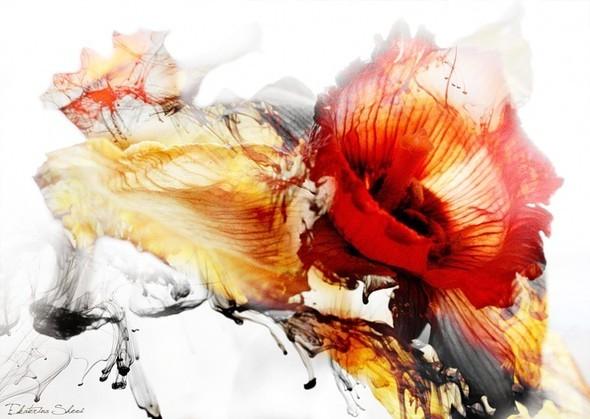 Время цветения. Изображение № 7.