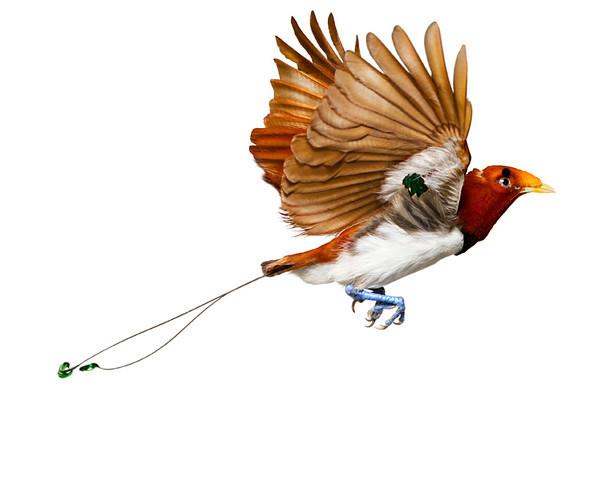 Божественные птицы Andrew Zuckerman. Изображение № 6.