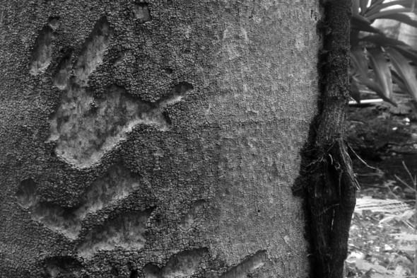 Наблюдая за пальмой. Изображение № 8.