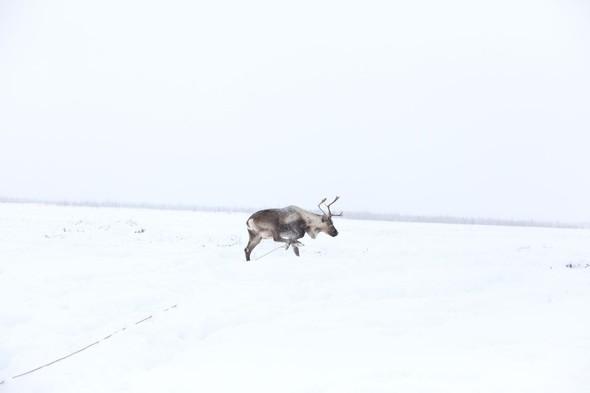 Путешествие на Север к ненцам. Изображение № 1.