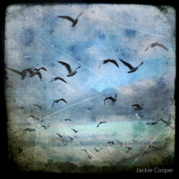 Фотограф Jackie Cooper. Изображение № 5.