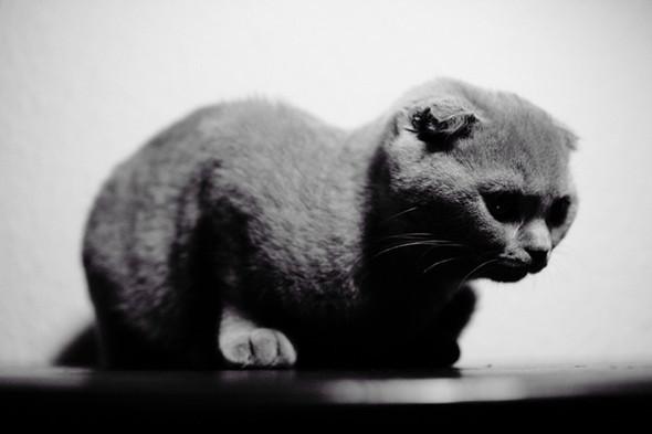 Блудливые коты. Изображение № 20.