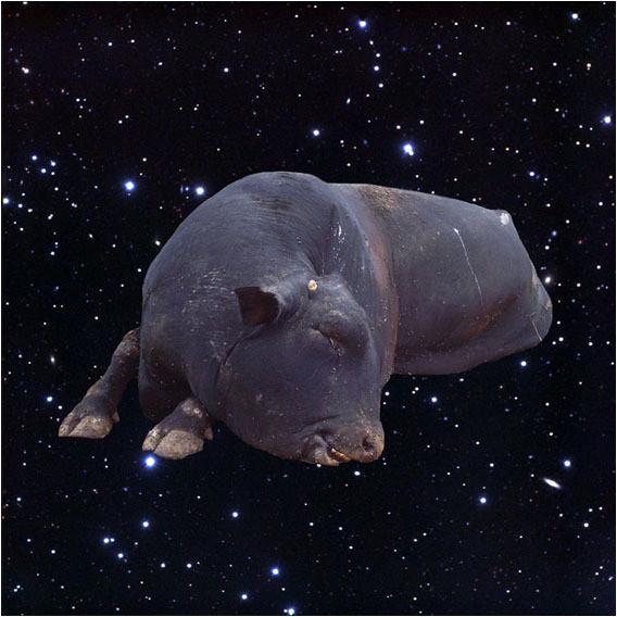 Белок на обочинах сверхновых. Изображение № 7.