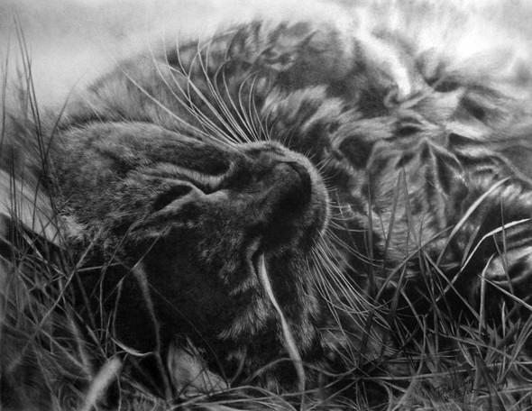 Кошки, люди, карандаш. Paul Lung. Изображение № 5.