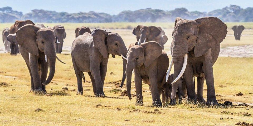 Язык животных: Как поговорить с собакой, дельфином и слоном. Изображение № 8.