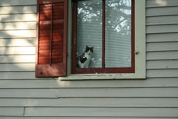 Cat. Window. Изображение № 27.