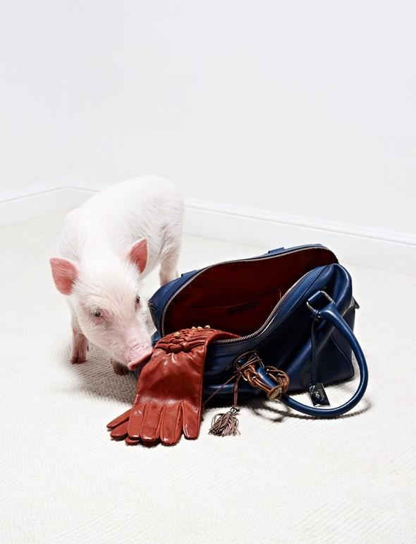 Съёмка: Животные в Viva! Moda. Изображение № 2.