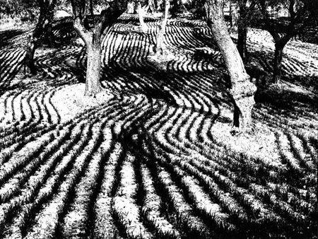 Mario Giacomelli – эстет мрака. Изображение № 22.