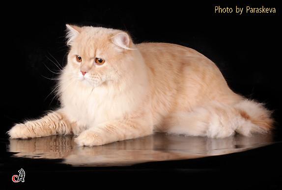 Кошки в интерьере. Изображение № 14.
