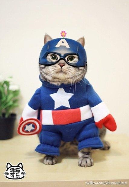 Котик косплеит супергероев. Изображение № 1.