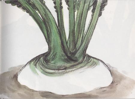 Репка пояпонски. Изображение № 6.