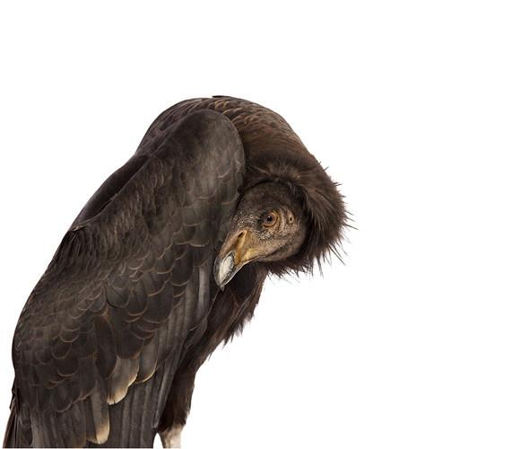 Божественные птицы Andrew Zuckerman. Изображение № 9.