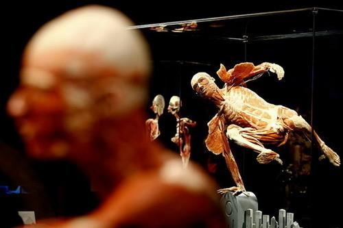Скандальная выставка анатома Гюнтера ФонХагенса. Изображение № 7.