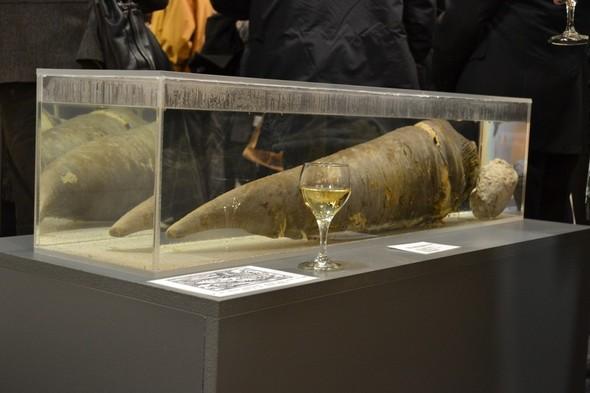 Фаллологический музей вернулся в Рейкьявик. Изображение № 15.