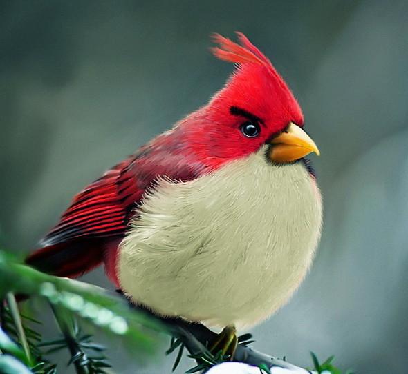 Реальные Angry Birds. Изображение № 1.