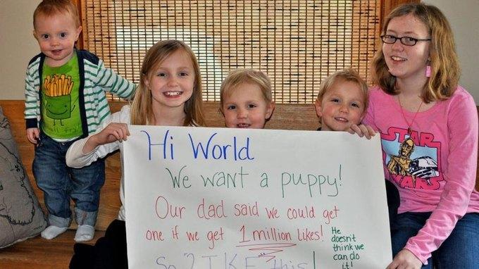 Дети собрали почти 2 млн лайков, выпрашивая у отца щенка. Изображение № 1.