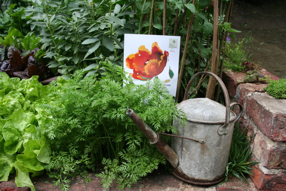 3–8 июля: Московский фестиваль садов и цветов в Парке Горького. Изображение № 3.