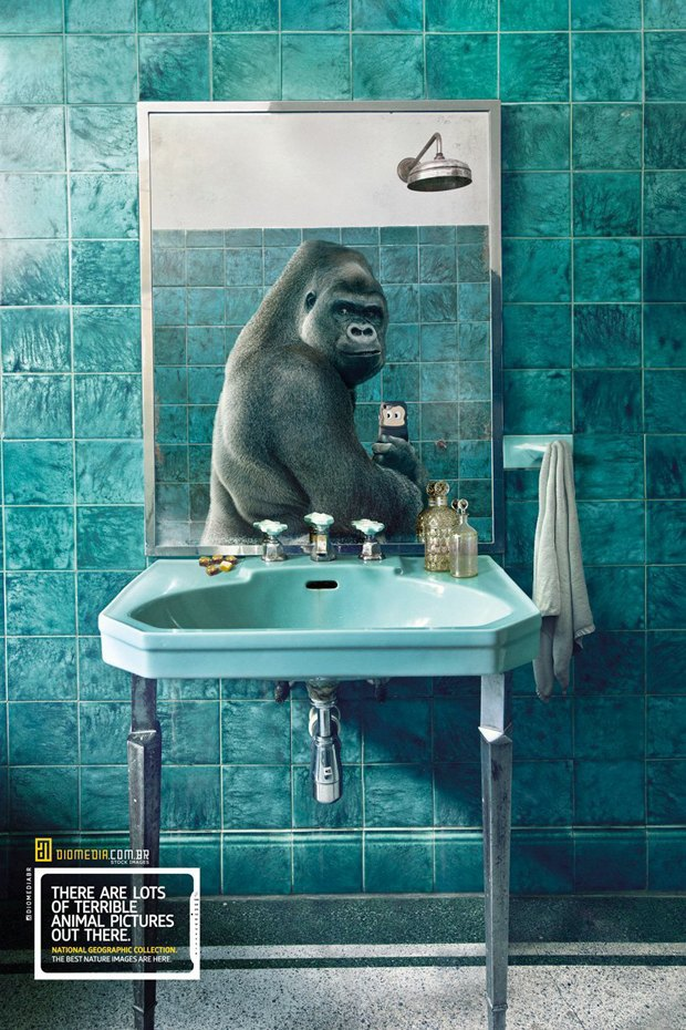 Животные делают селфи в новой рекламе National Geographic. Изображение № 2.