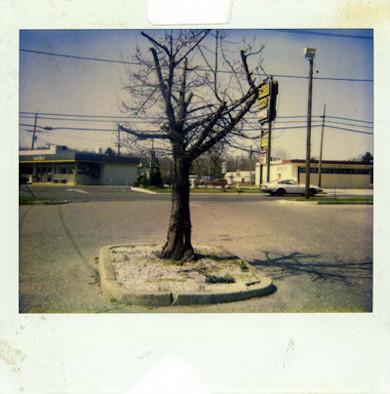20 фотоальбомов со снимками «Полароид». Изображение №154.