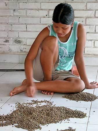 Процесс производства одного изэлитных сортов кофе. Изображение № 8.