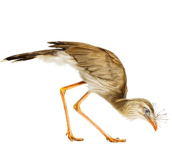Божественные птицы Andrew Zuckerman. Изображение № 2.